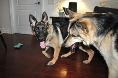 Dexter and Jack have a great blog!