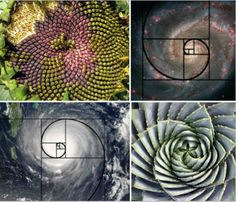 Hurricanes, galaxies, sunflowers and succulents all have inherent spiral shapes that conform almost perfectly to the 'golden spiral', which is derived from a mathematic formula. A golden spiral is a logarithmic spiral with a growth factor of 'Phi', which is the golden ratio – that means it gets wider by a factor of Phi for every quarter turn it makes.