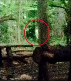 Spooky: Blair witch ghost 'captured on camera' roaming around Bristol woods