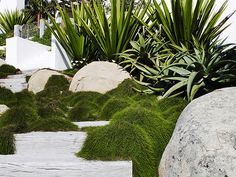 Coogee seaside garden I completed back in 2010 Modern Landscaping, Landscaping Plants, Outdoor Landscaping, Outdoor Gardens, Landscaping Ideas, Dry Garden, Garden Shrubs, Succulent Planters, Succulent Arrangements