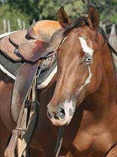 All The Pretty Horses, Beautiful Horses, Animals Beautiful, Cute Animals, Wild Animals Photography, Equine Photography, Rare Horse Colors, Horse Markings, Rare Horses