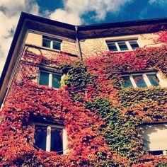 Yapraklar sarmış dört bir yanını... #almanya #stuttgart #sonbahar #feursee #autumn #gezgindirgezeninadi