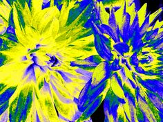 A pair of beautiful upbeat dahlias presented as an abstract digital painting in adjusted bright colors. Enhance your decor with a cheerful framed print.