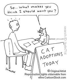 Cat Adoptions Today. by Betsy Streeter