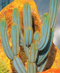 bleached by the sun; cacti, southwest, sunshine