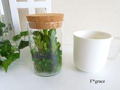 【新作】プリザーブドグリーン コルク蓋ガラスキャニスターテラリウム 【ソフトツゲと5種のグリーン】