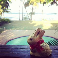 Lindt GOLD BUNNY on vacation! Photo by @marietorto