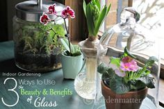 Bring some light and sparkle into your home and protect your plants. Here are 3 easy ways to do it. ~ gardenmatter.com