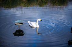Visiter #Londres avec le #LondonPass : #WetlandCentre