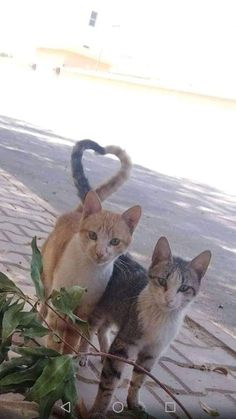 Two become one 💕 - Adorable Cats and Cute Kittens - Katzen Bilder Cute Kittens, Cats And Kittens, I Love Cats, Crazy Cats, Cool Cats, Baby Animals, Funny Animals, Cute Animals, Cute Animal Photos