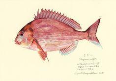 魚の譜 Uonofu