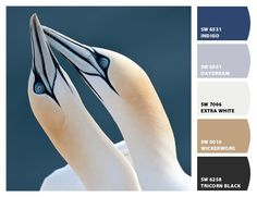 Northern Gannet paint colors by Sherwin-Williams-idea for upstairs bathroom color -- beautiful color pallet