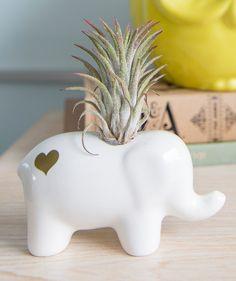 Elefante Blanco - Matera Small. $40.000 COP. Encuentra más materas, floreros y plantas ornamentales en https://www.dekosas.com/floreros-plantas-ornamentales