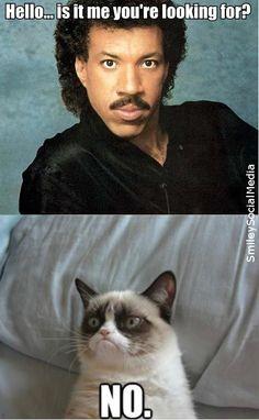 "Lionel Richie ""Hello"" and grumpy cat"