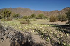 Trip to Richtersveld desert in South Africa by Geology and pictures of landscape. Travel Tours, Tour Guide, Geology, South Africa, Succulents, Scenery, Mountains, Landscape, Flowers