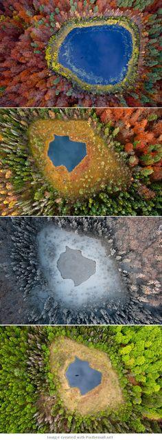 Photographs by Kacper Kowalski - Polish Trees