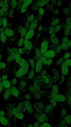 Nature Wallpaper Iphone Life 17 New Ideas Green Leaf Wallpaper, Plant Wallpaper, Cute Wallpapers, Wallpaper Backgrounds, Iphone Wallpaper, Green Leaves, Plant Leaves, Foto Art, Plant Pictures