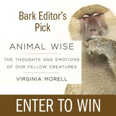 Enter for a Chance to Win Animal Wise | The Bark