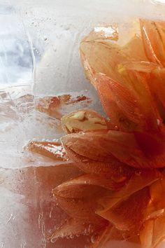 Orange dahlia set into ice--eggs on the roof