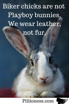 Biker Women Are Not in Playboy Motorcycling women are not Playboy bunnies - we don't have a full covering of fur, thanks very much!Motorcycling women are not Playboy bunnies - we don't have a full covering of fur, thanks very much! Motorcycle Safety Gear, Playboy Bunny, Lady Biker, Custom Bikes, Thankful, Bikers, Bunnies, Cover, Motorcycles