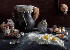 Пушистые кулинары. Автор фото: Елена Еремина.