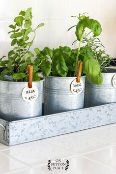 Kitchen Herb Garden | Put this farmhouse style kitchen herb garden together in minutes! Galvanized metal containers | Indoor herb garden | Herb garden tags. #Herbgardendesign