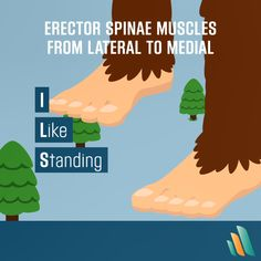 This mnemonic will help you memorize the paired erector spinae muscles when you can't STAND looking at a study guide anymore.