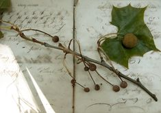 Mississippi Sisters: Fall Foliage