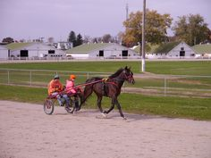 Yearling trotting colt, Rose Run Pancho, gets started under harness at the Wayne Co. Fairgrounds in Wooster, Ohio.