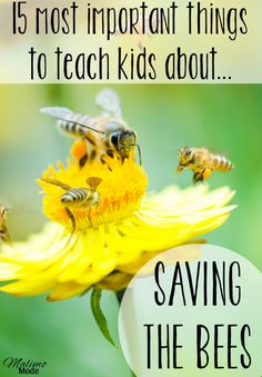 Bees and pollination - the 15 most importan questions to ask! (Especially no.15!) Tips on how to teach children about the topic, and help save the bees! Combine reading, science, biology and crafts with two different projects! Great ideas, activities, strategies, and more included her! Click through! Really great for your 2nd and 3rd grade classroom or homeschool students. {second or third grader}