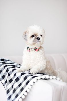 Make you're own NO-SEW dog blanket - follow our quick AND easy tutorial to make your own dog travel blanket - for at home and away. No sewing required! Diy Projects For Dog Lovers, Animal Projects, Diy Dog Blankets, Diy Dog Bed, Dog Beds, Diy Dog Collar, Toy Puppies, Dog Travel, Cat Crafts