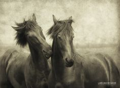 Horses Don't Whisper, They Just Talk by Lars van de Goor Animals on 500px
