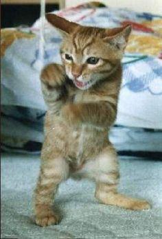Kitty boxer!