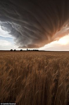 Supercell storm cloud (Low Precipitation) above the Gurley wheat field, Nebraska on 22 June 2012.