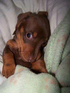 Adorable Doggie!
