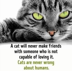 Cats Are Our Favorite Persons In The World