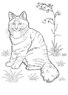 Click to see printable version of Norwegian Forest Cat  coloring page