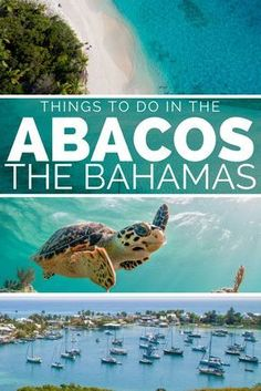 Things to do in Bahamas on the Abaco Bahamas. For the best Bahamas Vacation visit Abaco Bahamas and island hop the Abacos Cays; Green Turtle Cay, Elbow Cay, Treasure Cay, Man-o-War Cay. Swim with the Bahamas Abaco turtles at Green Turtle Cay or see the sw Bahamas Pigs, Abaco Bahamas, Bahamas Honeymoon, Bahamas Beach, Bahamas Vacation, Vacation Trips, Family Vacations, Bahamas Resorts, Bahamas Cruise