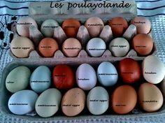 Homemade Face Wash, Chicken Feeders, Easter Eggs, Homesteading, Birds, Farms, Facial Cleanser Homemade