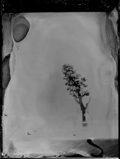Still Life Series 2014 Karen Hook Photography Wet Plate Collodian