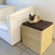 Puff for Cat Seu gato adora afiar as unhas no sofá? Então irá adorar o Puff for Cat! Modulo em madeira, revestido com corda sisal e assento estofado. Peça versátil pode ser usada como puff, mesa ao lado do sofá e até caminha para seu gato. O ato de arranhar superfícies é uma maneira natural do...