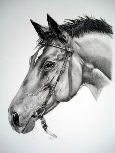 Horse Drawings, Animal Drawings, Pencil Drawings, Art Drawings, Painting Corner, Horse Artwork, Horse Portrait, Interesting Animals, Paper Drawing
