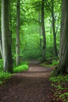heyfiki: chemin de la forêt