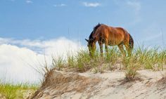 Never been privileged to see the horses of OBX.