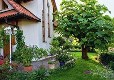 Павловния войлочная (Paulownia tomentosa) с крупными листьями великолепно притенит любое место отдыха. Для хорошего роста ей необходимо солнечное место.