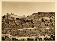 This is an original 1925 photogravure of the bas-relief aurochs on the Ishtar Gate, the eighth gate to the inner city of Babylon, the city-state of ancient Mesopotamia (present-day Iraq).