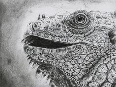 Leguan Reptil Pencil Drawing #sasu #art #drawing #leguan #pencil #realistic #reptil #artwork Gouache, Pencil Drawings, Illustration, Painting, Design, Art, Iguanas, Drawing Pics, Kunst