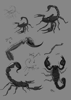 Scorpion study
