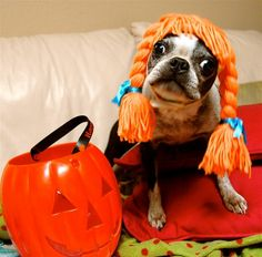 These dog recipes would work great ANY time of year, not just Halloween. In addition to the homemade dog treats recipes, you'll find some fun ways to give dogs their Halloween treats. Funny Dogs, Cute Dogs, Funny Animals, Cute Animals, Dog Halloween Costumes, Pet Costumes, Happy Halloween, Costume Ideas, Halloween Halloween