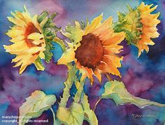 SUNFLOWERS II_(available as giclee print) by Mary Shepard Watercolor ~ image size: 16 x 20 unframed Sunflower Watercolor Painting, Flower Painting, Art Painting, Arches Watercolor Paper, Floral Art, Watercolor Flowers, Original Watercolor Painting, Artwork Painting, Watercolor Images
